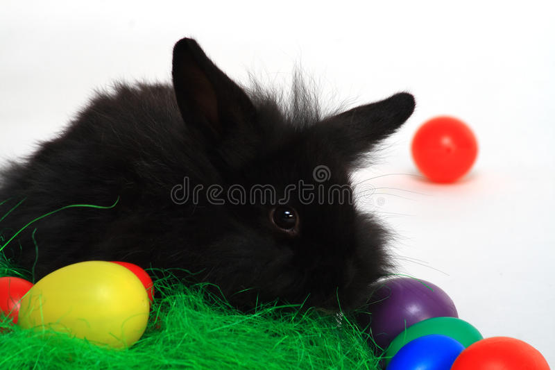 Coelho e ovos coloridos imagens de stock