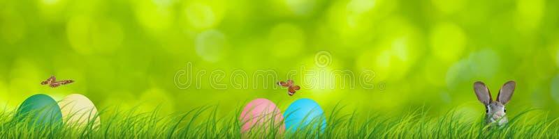 Coelho e ovos da páscoa da Páscoa escondidos em uma cena natural colorida fotografia de stock royalty free