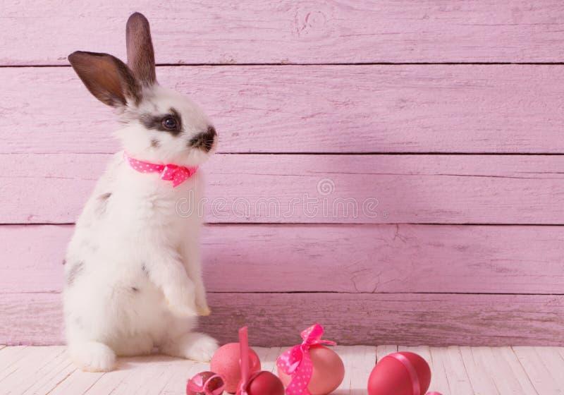 Coelho e ovos de Easter fotografia de stock