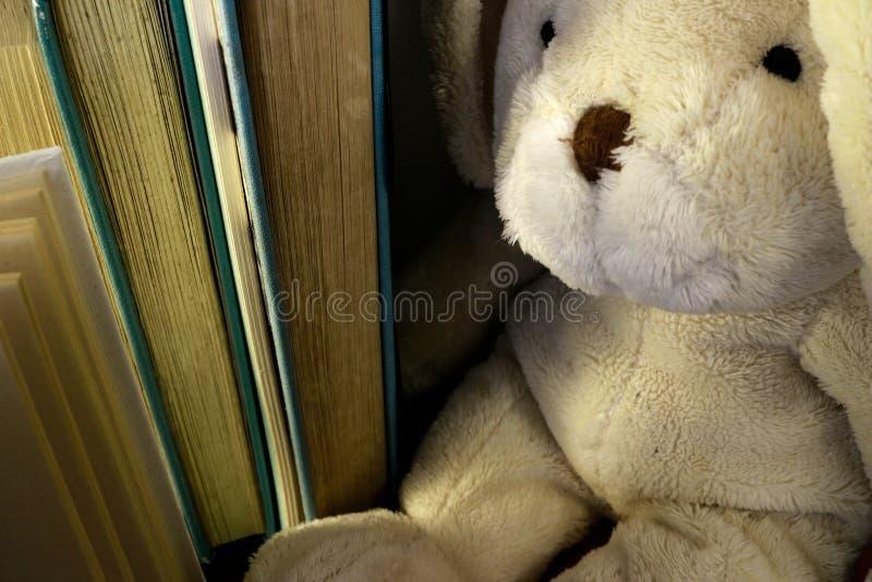 Coelho macio do luxuoso que senta-se ao lado de uma fileira de livros estando fotografia de stock