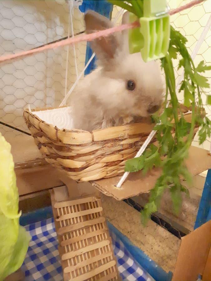 Coelho meu coelho bonito fotos de stock