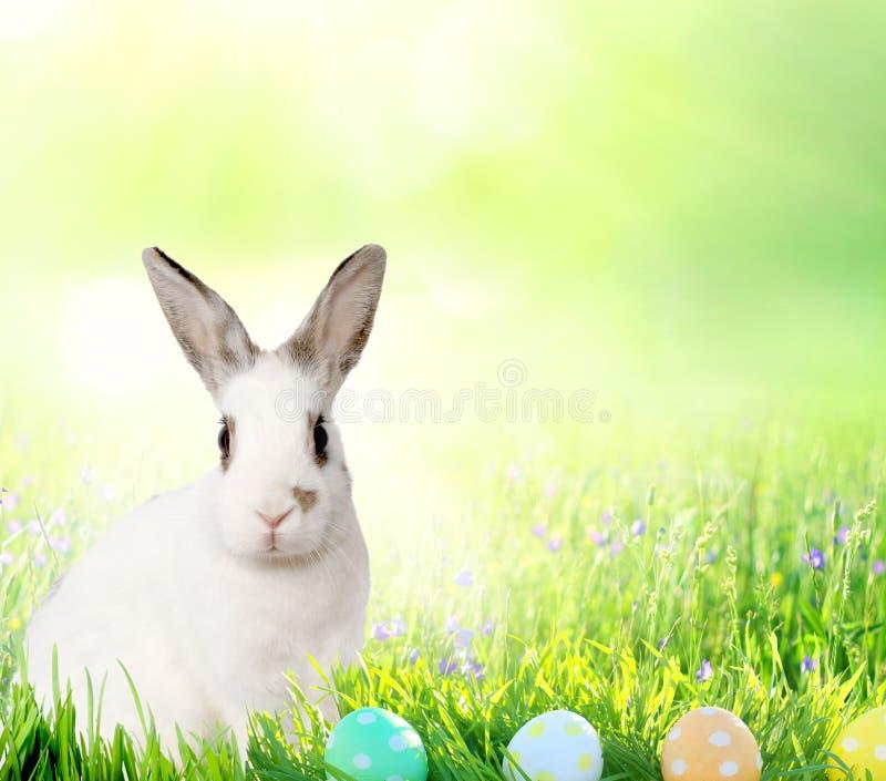 Coelho pequeno bonito e ovos da páscoa na GR verde fotos de stock royalty free
