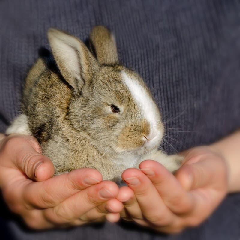 Coelho pequeno nas mãos Menina que guarda um coelho em seus braços imagem de stock
