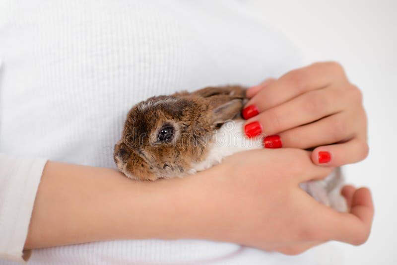 Coelho vivo nas mãos fêmeas Ascendente pr?ximo do coelho Coelho de Easter bonito imagem de stock