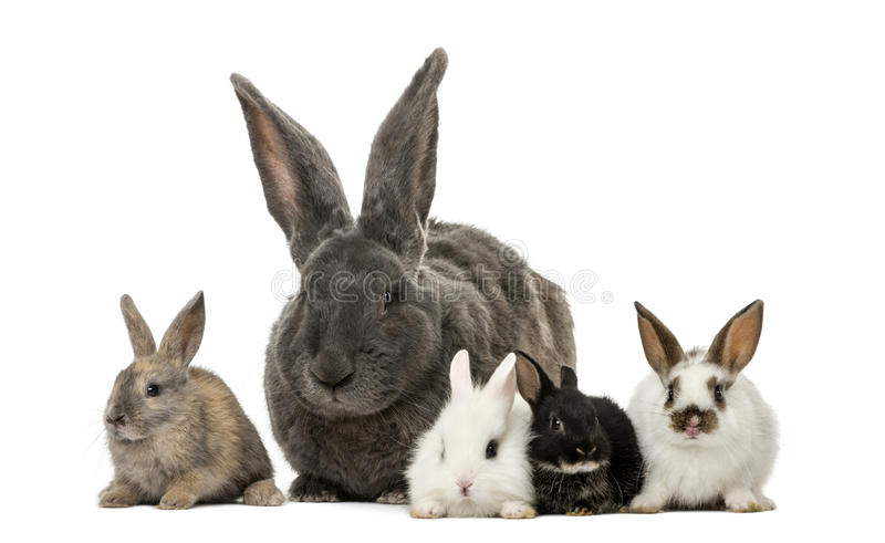 coelhos fotos de stock