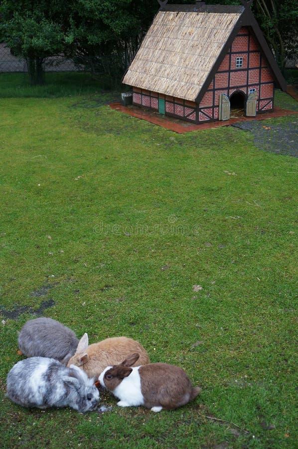 Coelhos, coelho, casa para coelhos, animais, jardim zoológico, lebre, coelho foto de stock