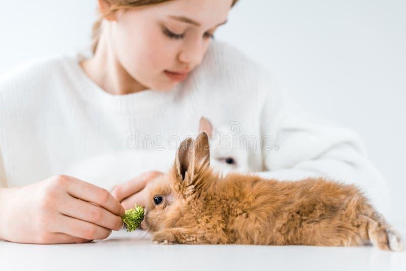 Coelhos de alimentação da menina bonito com brócolis no branco foto de stock royalty free