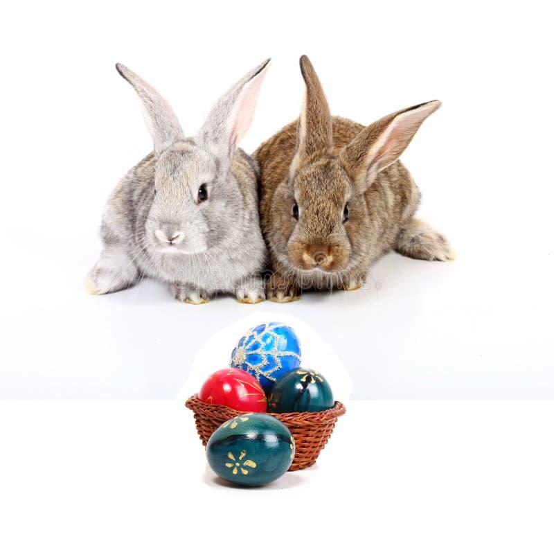 Coelhos de Easter fotos de stock