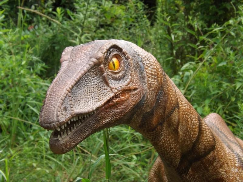 Coelophysis Dinosaur. Dino taken at display in Birmingham Zoo royalty free stock photo
