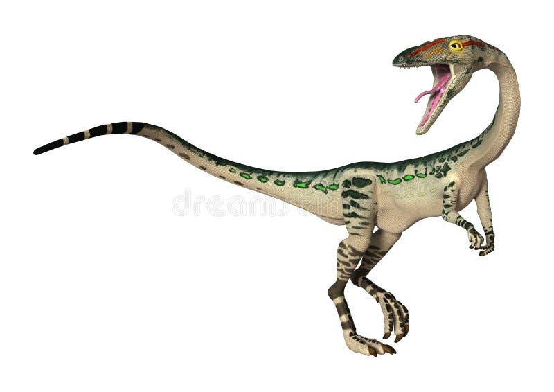 Coelophysis do dinossauro da rendição 3D no branco ilustração stock