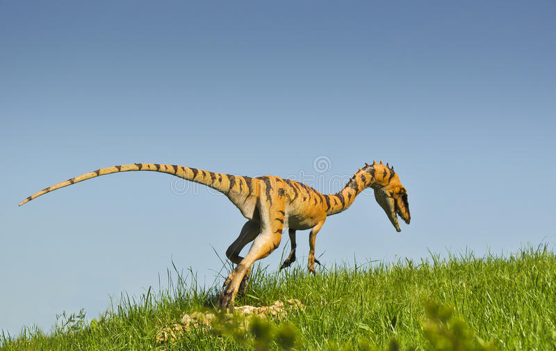 Coelurus - carnivorous killer from Jurassic period stock photography