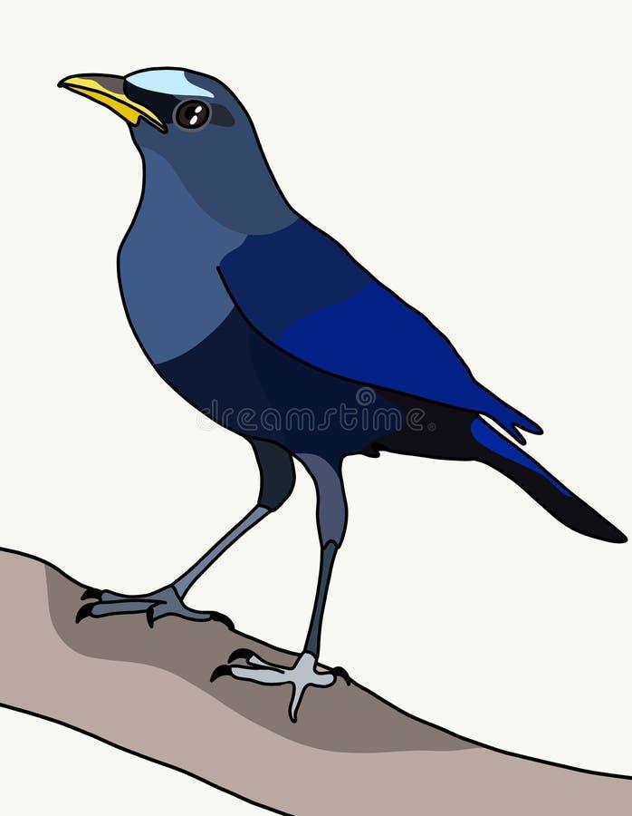 Coeruleus Myophonus бесплатная иллюстрация