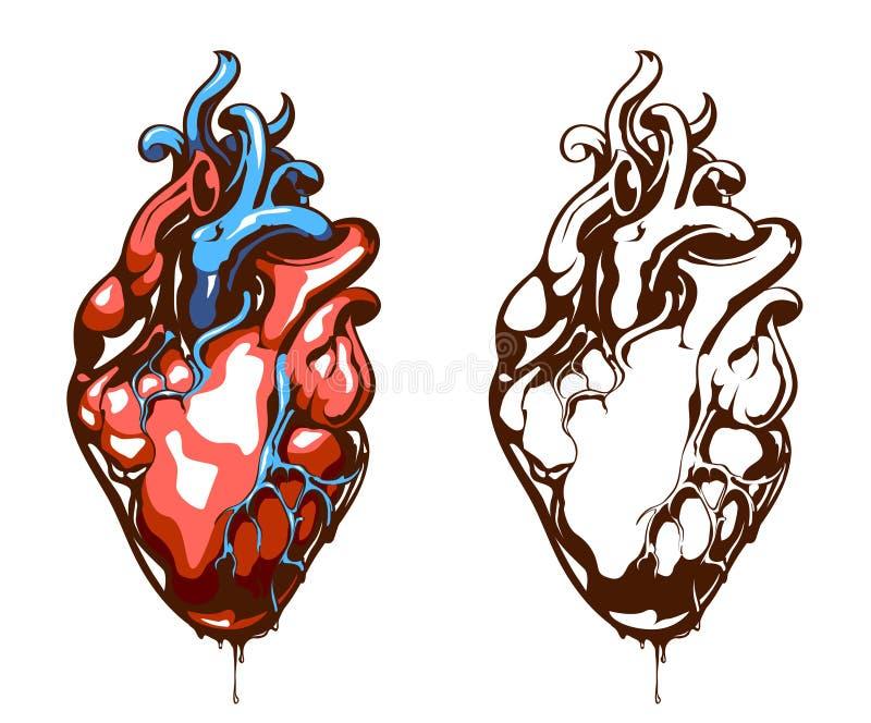 Coeur anatomique illustration stock