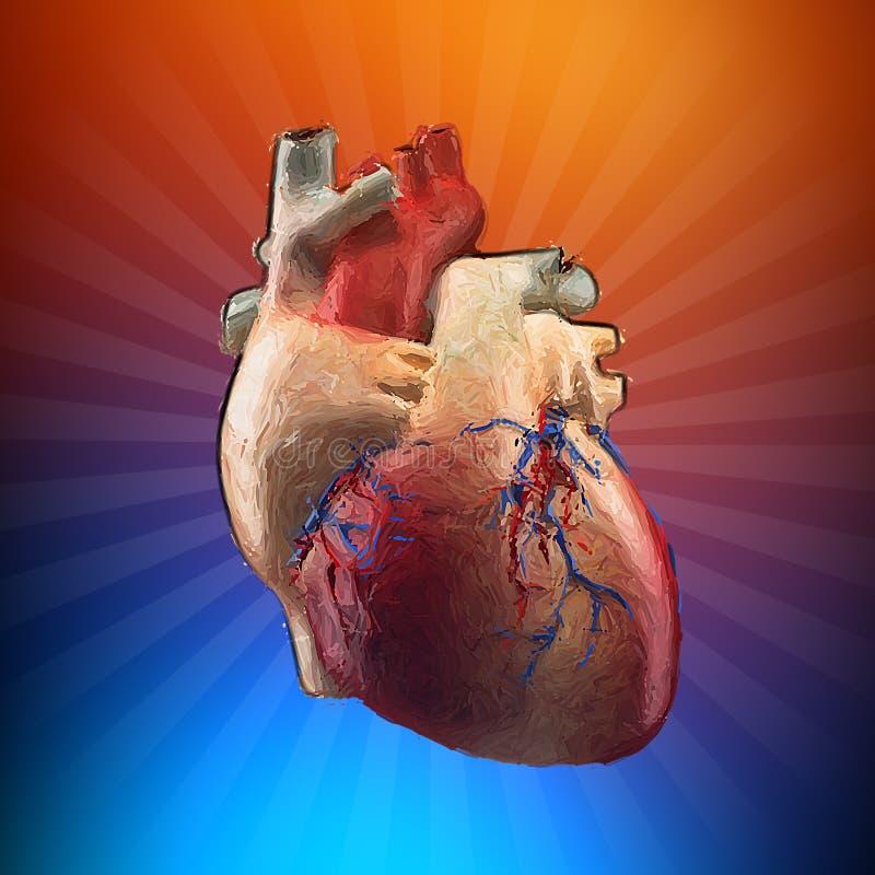 Coeur d'anatomie - concept peint illustration libre de droits