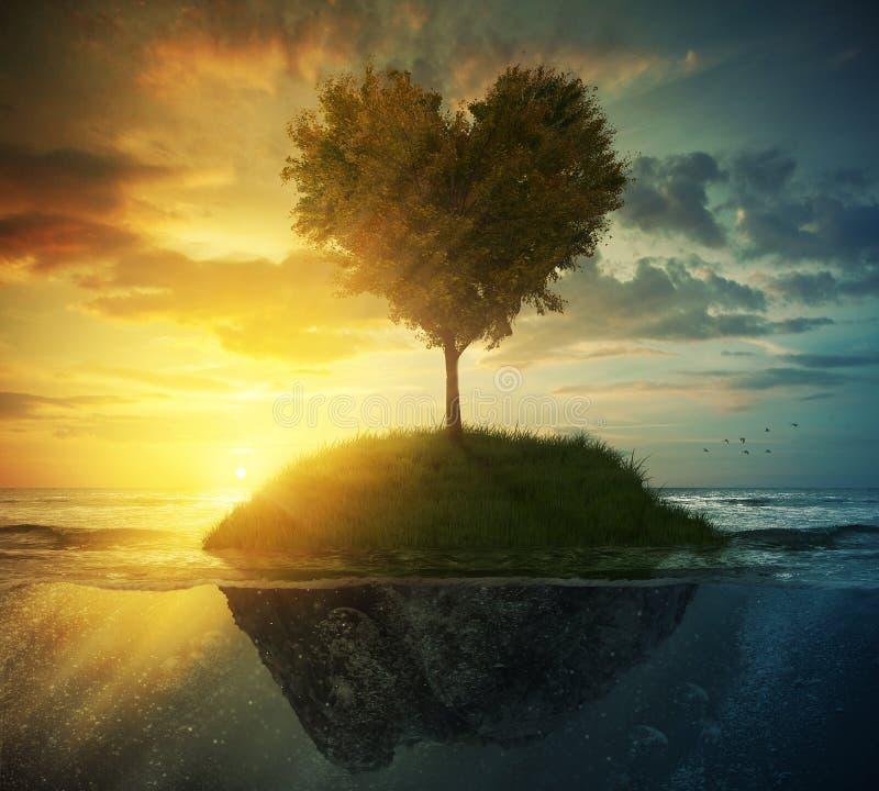 Coeur d'arbre dans l'océan photos stock