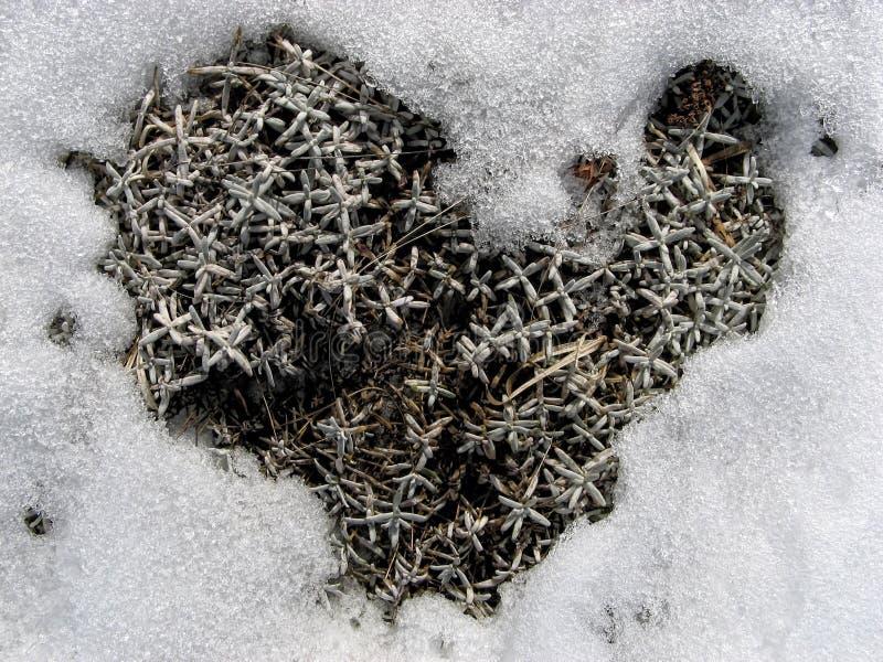 Coeur d'hiver, symbole d'amour image libre de droits