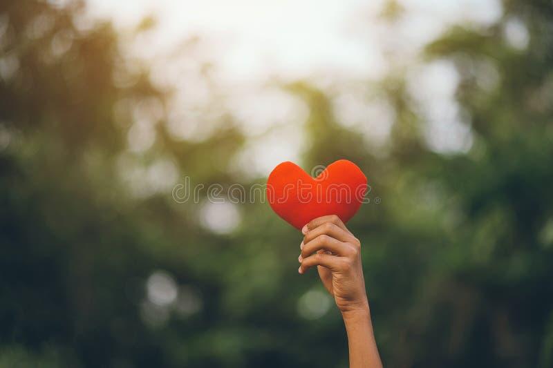 Coeur dans des nos petites mains image libre de droits