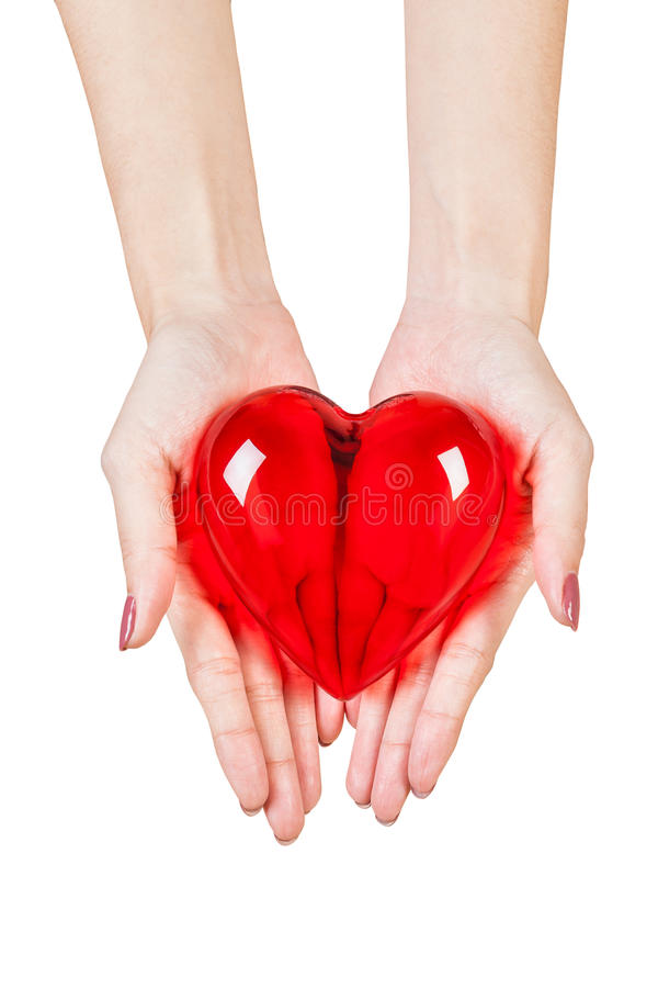 Coeur dans les mains d'isolement sur le fond blanc image libre de droits