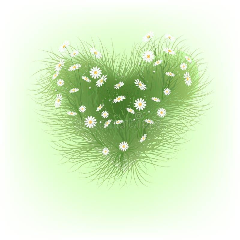 Coeur de camomille illustration libre de droits