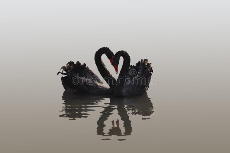 Coeur de cygne photographie stock