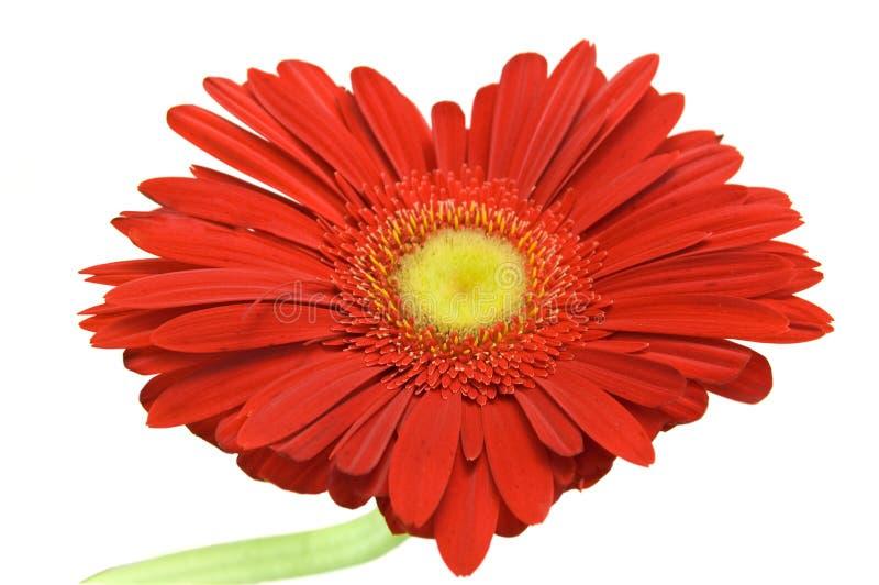 Coeur de fleur photo stock