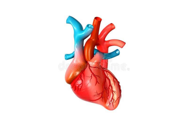 coeur de l'humain 3d illustration stock
