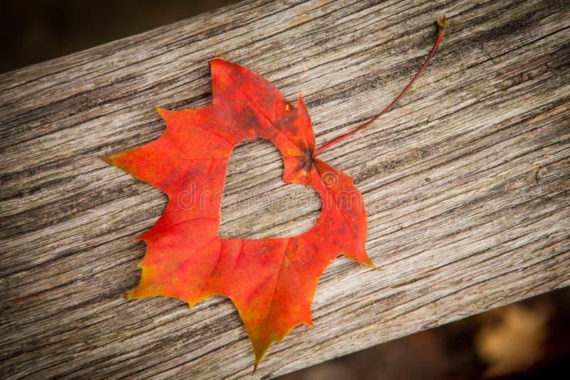 Coeur de lame d'automne photographie stock