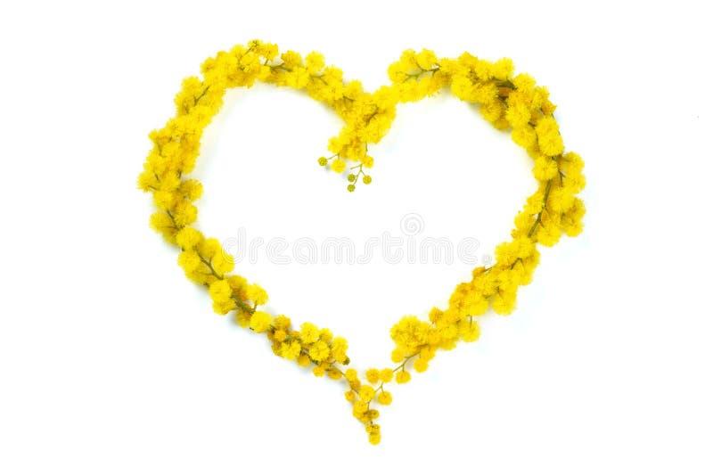 Coeur de mimosa photos libres de droits