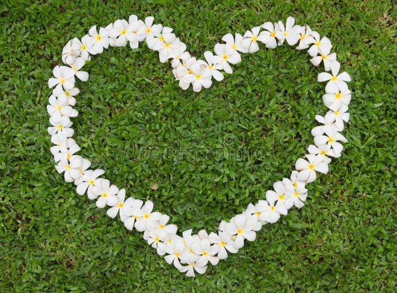 Coeur de Plumeria image stock
