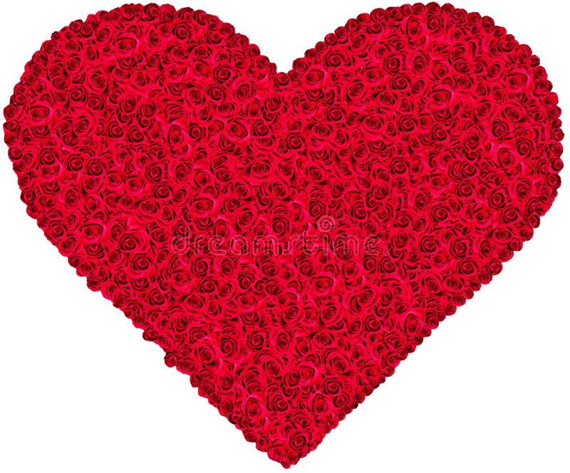 Coeur de rose de rouge photos libres de droits
