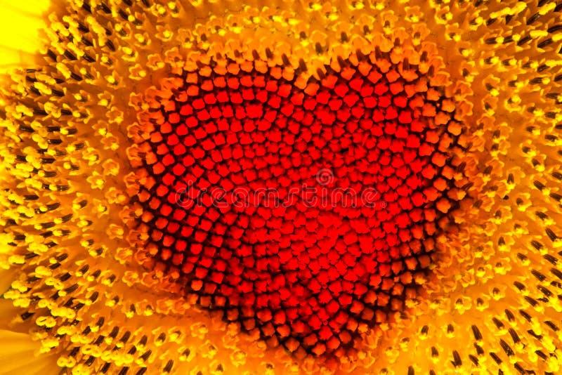 Coeur de tournesol images libres de droits
