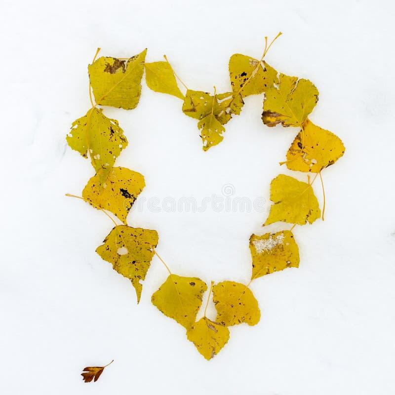 Coeur des feuilles photo libre de droits