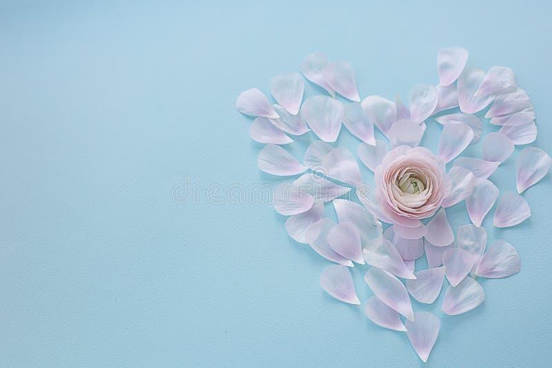 Coeur des pétales rose-clair sur un fond de texture bleu-clair avec une fleur au centre photos stock