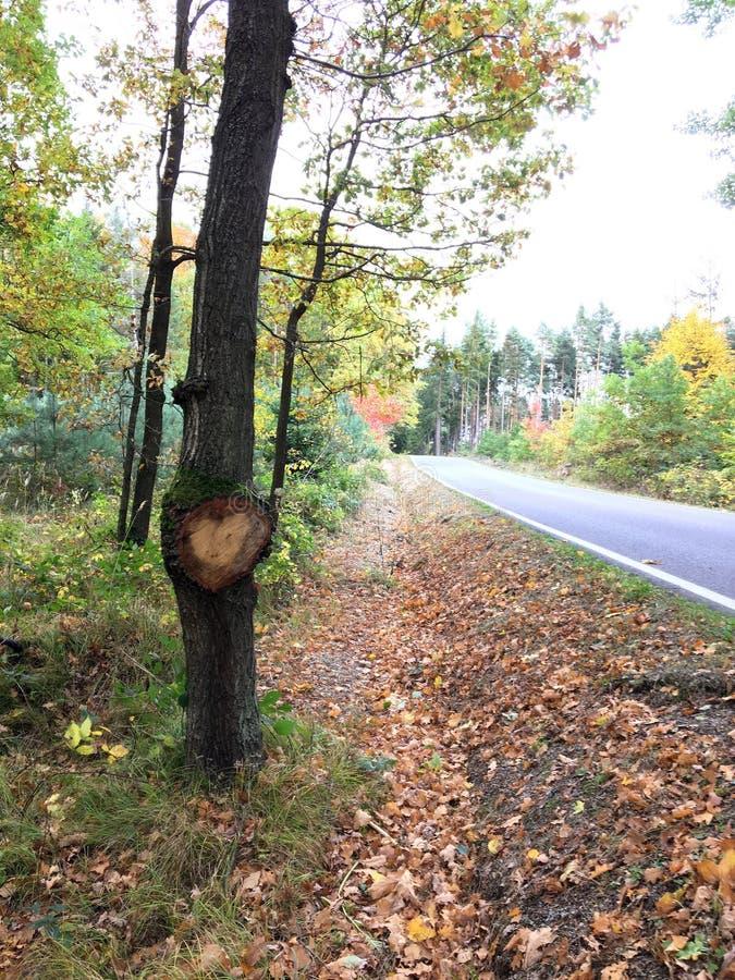 Coeur et arbre à côté de route d'automne image stock