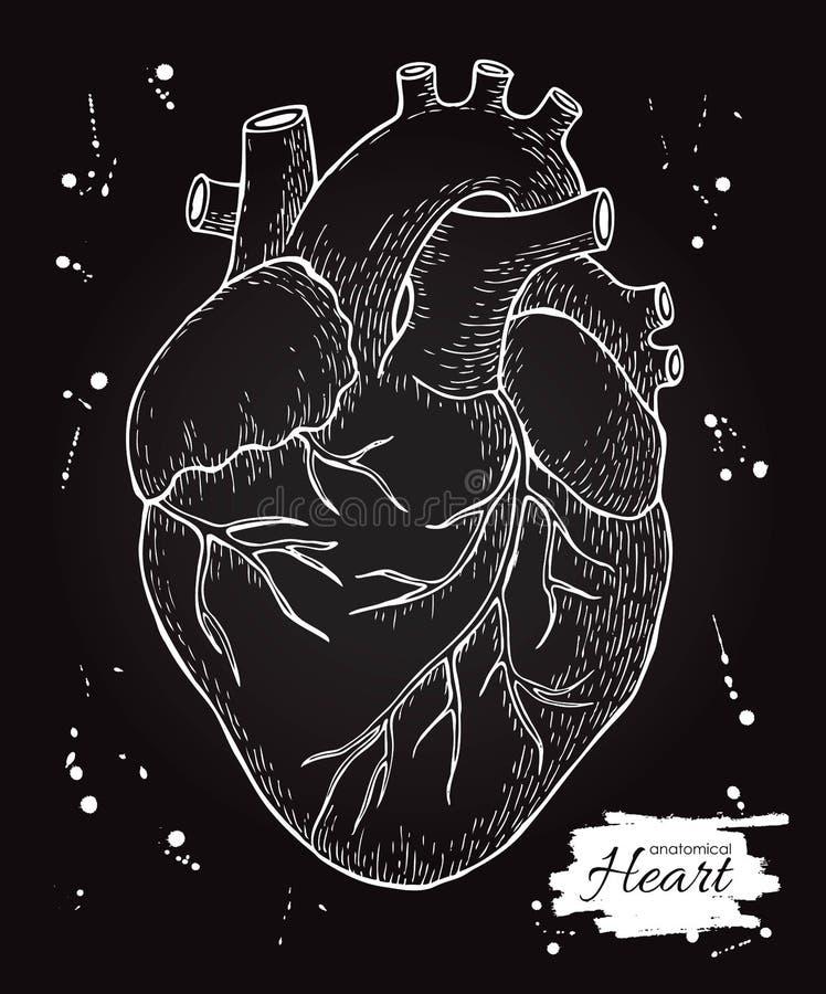 Coeur humain anatomique Illustration détaillée gravée Main DR illustration de vecteur