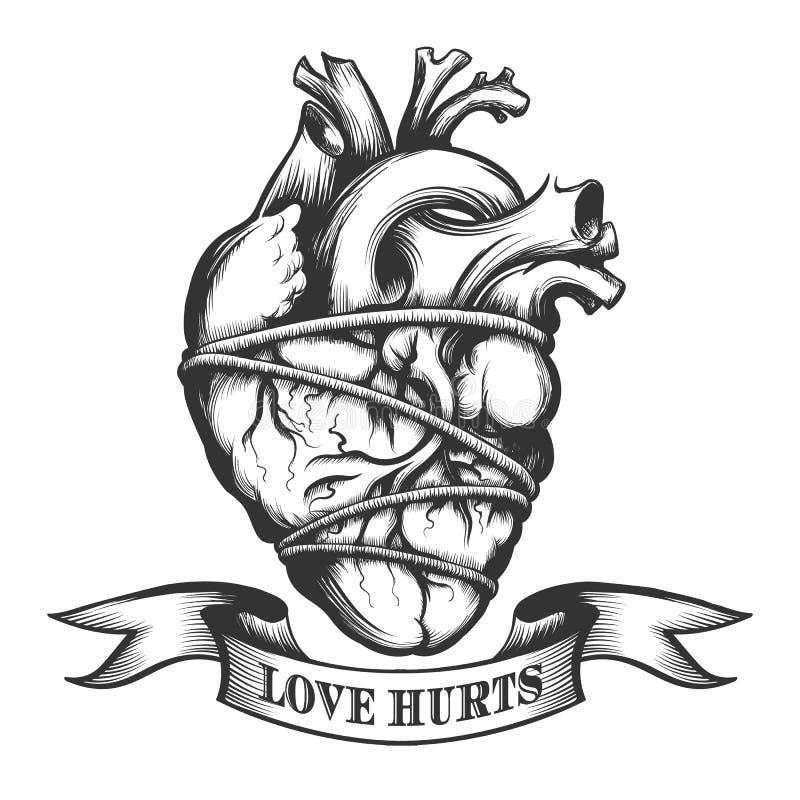 Coeur humain attaché illustration stock