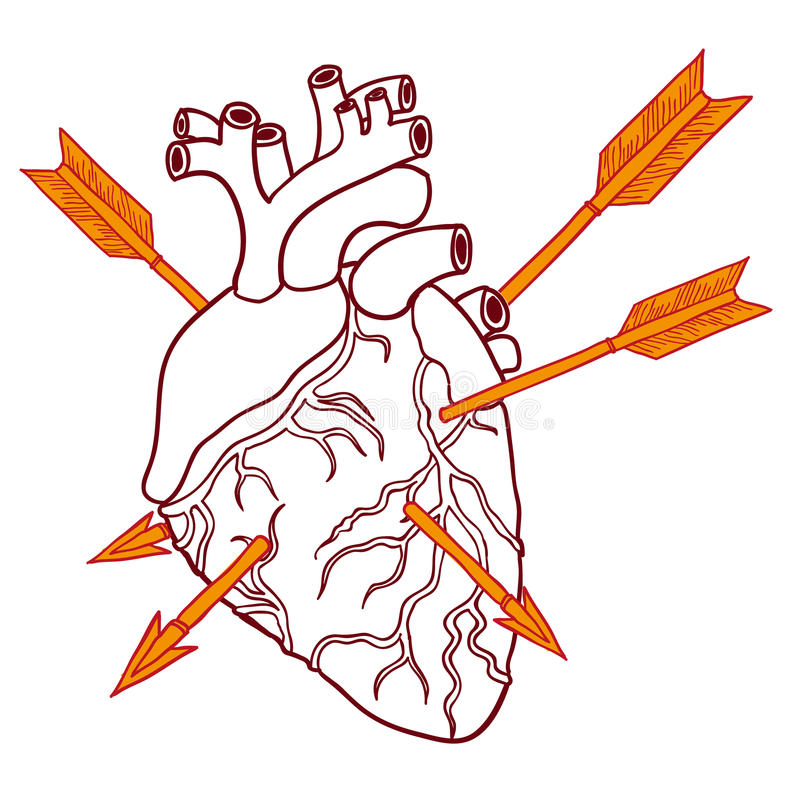 Coeur humain avec des flèches Le visage des femmes tirées par la main d'illustration illustration libre de droits