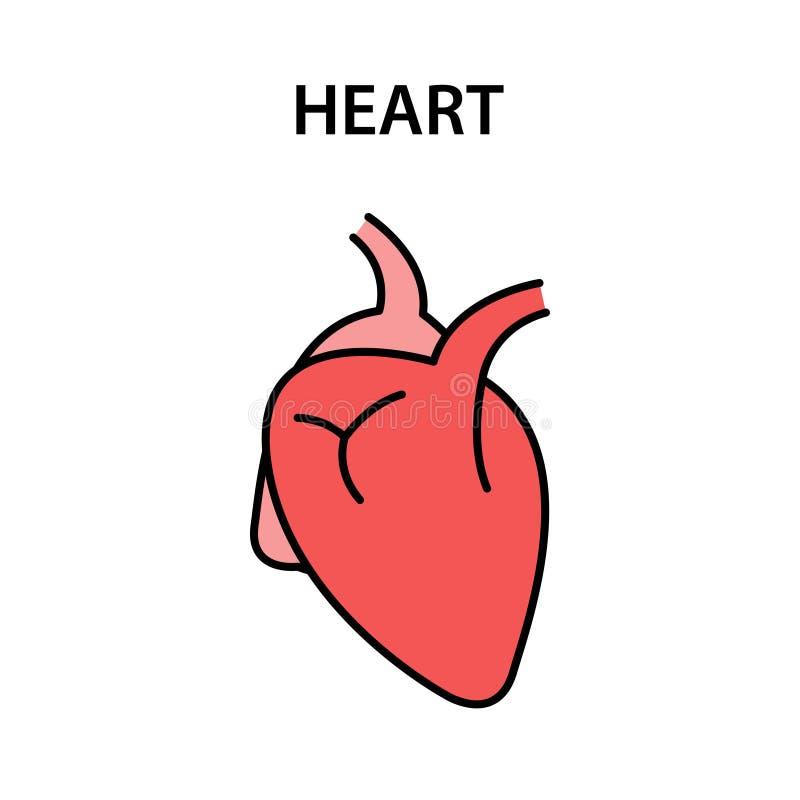 Coeur humain d'organe interne Organes forts sains Illustration de vecteur illustration stock