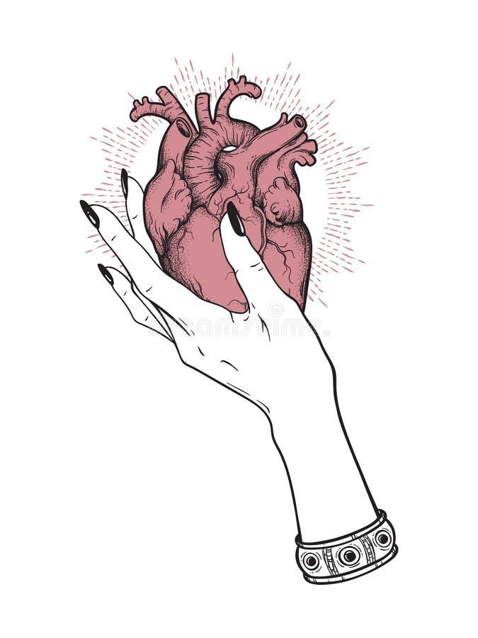 Coeur humain dans la main femelle gracieuse d'isolement Illustration tirée par la main de vecteur de tatouage d'autocollant, d'im illustration libre de droits