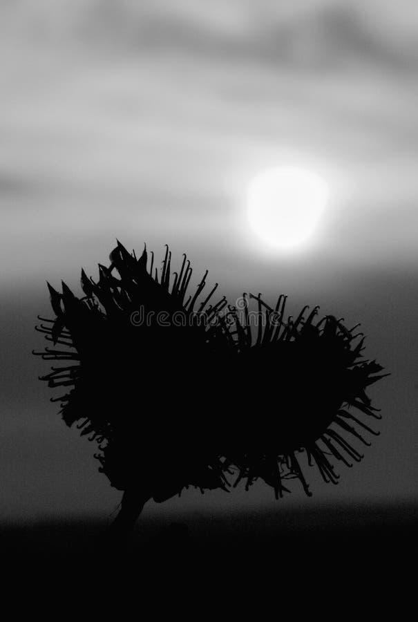 Coeur noir et blanc avec le coucher du soleil photos stock
