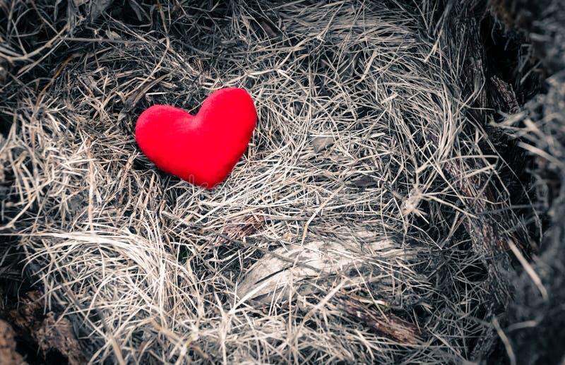 coeur rouge avec le ton dramatique photos libres de droits