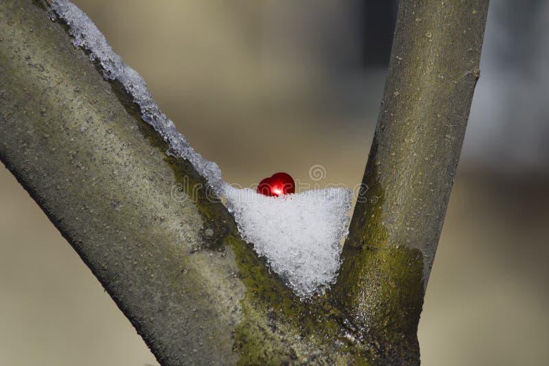 coeur rouge dans la neige sur une branche images stock