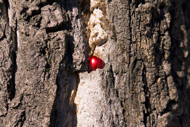 Coeur rouge dans un arbre sec images libres de droits