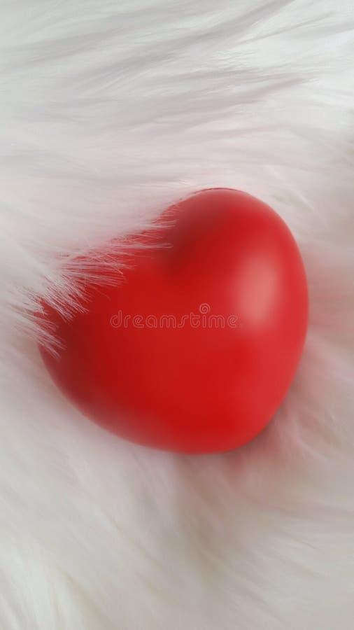 Coeur rouge sur le fond blanc de fourrure images libres de droits