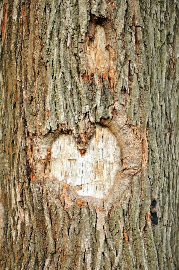 Coeur sur un arbre photos stock