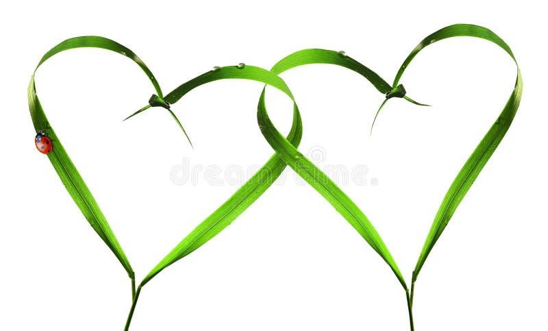 Coeurs avec des lames d'herbe, scarabée de coccinelle images libres de droits