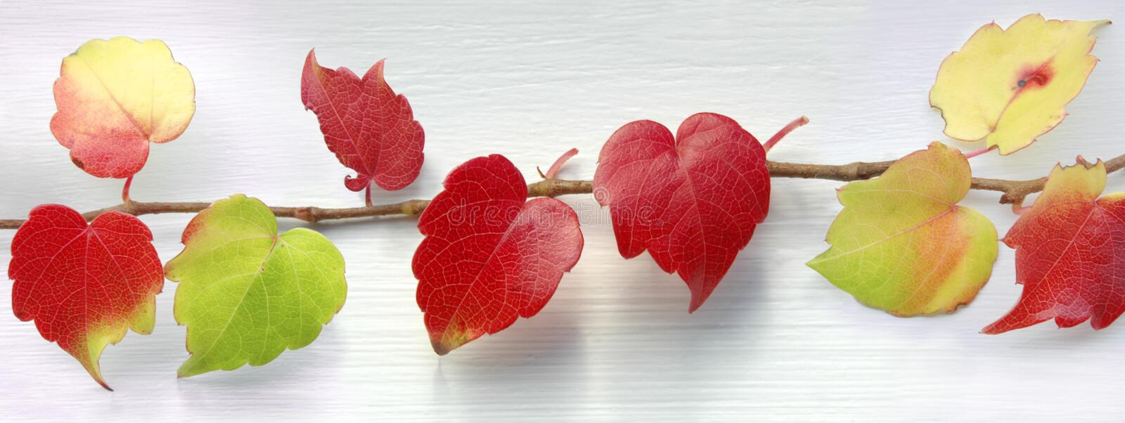 Coeurs rouges photographie stock