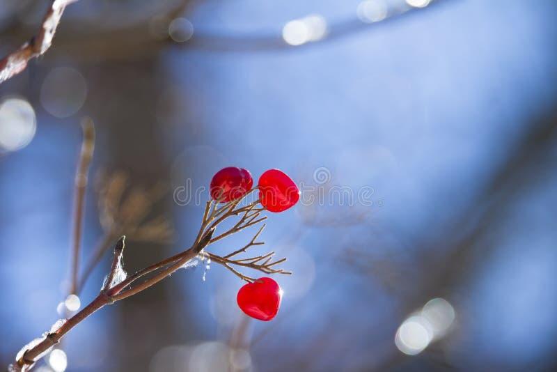 Coeurs rouges sur une branche d'arbre image libre de droits