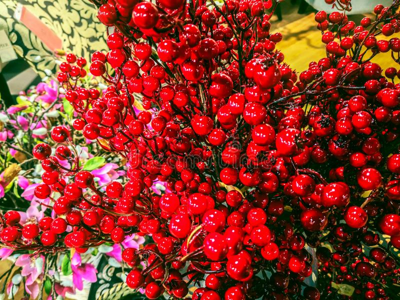 Red rowan and fir tree branches royalty free stock images