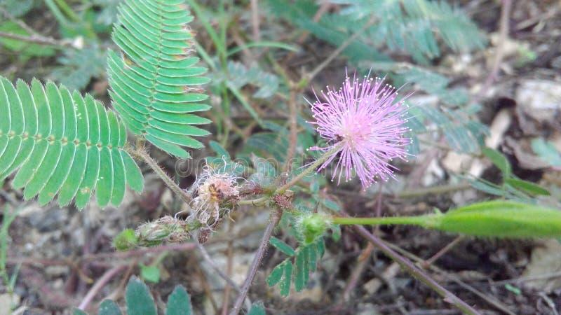 COFA SIĘ rośliny obraz royalty free